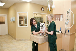 Westbridge Veterinary Hospital - Photo 7