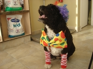 Westbridge Veterinary Hospital - Photo 9
