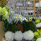 House Of Flowers - Florists & Flower Shops - 905-845-7573