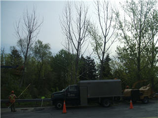 Quality Tree Service - Photo 2