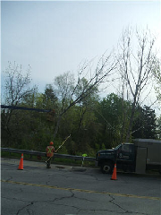 Quality Tree Service - Photo 3