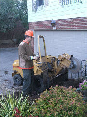 Quality Tree Service - Photo 5