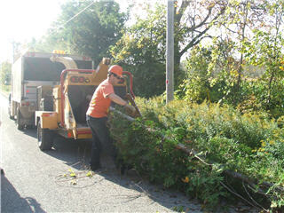 Quality Tree Service - Photo 9