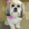 Doggie Styles Pet Grooming - Pet Grooming, Clipping, & Washing - 905-630-9113
