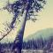 Dave's Tree Care - Tree Service - 604-980-3768