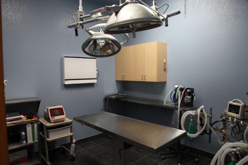 Dog & Cat Hospital - Photo 8