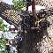 Hackett & Hill Tree Specialists - Tree Service - 613-786-1360