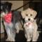 Splish Splash Pet Grooming - Pet Grooming, Clipping, & Washing - 519-307-1021