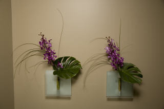 Vancouver Dental Spa - Photo 4