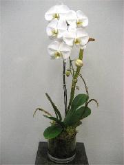 Hanamo Florist - Photo 2