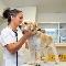 Hôpital Vétérinaire De L'Estrie - Magasins d'accessoires et de nourriture pour animaux - 819-562-8585
