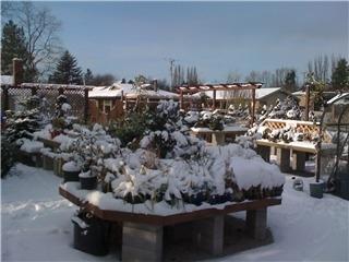 KJM Country Gardens - Photo 11