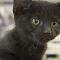Animalerie Mini Pets - Animaleries - 450-477-7676