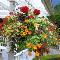 Purity Feed Farm & Garden Centre - Garden Centres - 250-372-2233