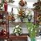 Rockwood Florists - Florists & Flower Shops - 905-624-3191