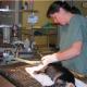 Clinique Vétérinaire Vétérivi - Vétérinaires - 819-826-3627