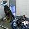 Dogwood Boarding Kennels - Kennels - 250-478-0073