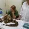Hopital Vétérinaire pour Oiseaux et Animaux Exotiques - Photo 9