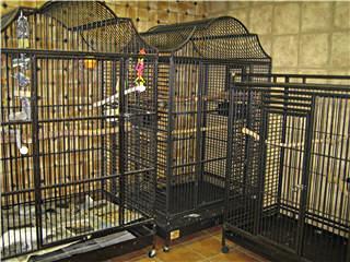 Hôpital Vétérinaire pour Oiseaux et Animaux Exotiques - Photo 3