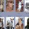 Toilettage Pilon - Toilettage et tonte d'animaux domestiques - 450-373-7540