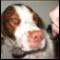 Codiac Pet Supply Formerly Wag N' Wash Inc - Pet Food & Supply Stores - 506-388-9274