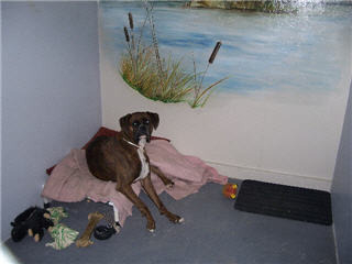 Glenpark Pet Hotel & Suites - Photo 6