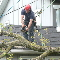 photo Four Seasons Tree Care