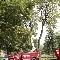 Dulac Tree Service - Poles - 514-355-2232
