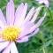 Greengate Garden Centres - Garden Centres - 403-256-1212