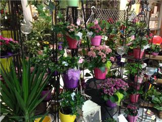 Plantation Flowers & Gifts - Photo 7