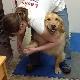 Lesley's Complete Pet Parlor - Pet Care Services - 250-564-7311
