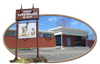 Hôpital Vétérinaire Daubigny - Photo 5