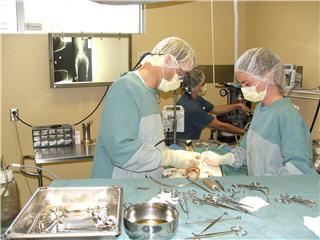 Hôpital Vétérinaire Daubigny - Photo 8