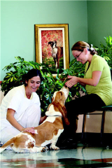 Centre Vétérinaire Daubigny - Photo 10