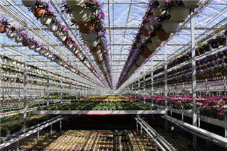 Vandermeer Nursery Ltd - Photo 7