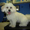 Westwood Grooming Salon - Pet Grooming, Clipping, & Washing - 604-552-2677