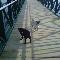 Niagara Regional Pet & Home Services - Pet Sitting Service - 289-969-7387