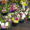 Bunches Park Allen Place - Florists & Flower Shops - 780-447-5359
