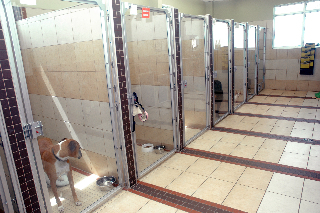 Carling Animal Hospital - Photo 4