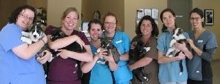 Carling Animal Hospital - Photo 10