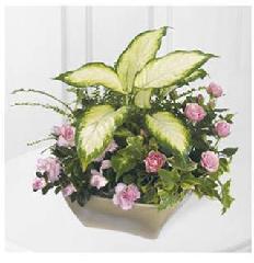 Carisma Florists Ltd - Photo 10