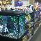 Noah's Ark Pets & Supplies Ltd - Pet Shops - 780-939-2528
