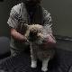 View Edmonton Assn Of Small Animal Veterinarians - Delton Veterinary Hospital's St Albert profile