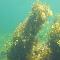 Nautilus Aquatic Centre - Diving Lessons & Equipment - 902-454-4296