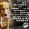 Creature Comforts Pet Services - Pet Sitting Service - 905-278-9738
