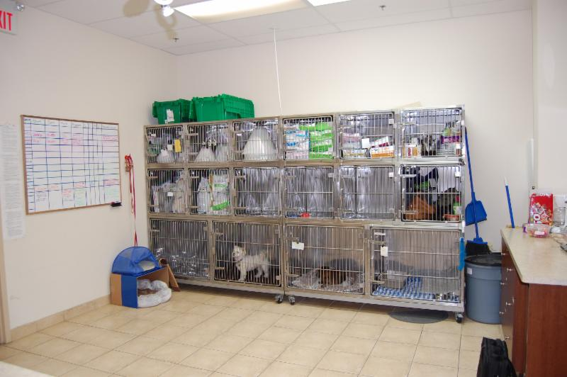 Derry Heights Animal Hospital - Photo 8