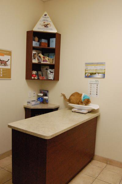 Derry Heights Animal Hospital - Photo 6
