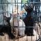 Animalerie Les Rivières - Pet Shops - 819-840-0063