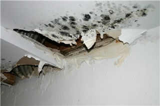Inspectrum Residential Inspection - Photo 4
