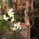 Fleuriste Shawinigan-Sud - Fleuristes et magasins de fleurs - 819-537-8989